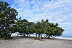 Isla tropical de Aruba en la playa del águila Foto de archivo