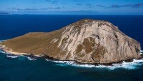 Isla tropical Oahu Hawaii del conejo que sorprende foto de archivo libre de regalías