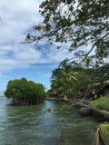 Isla verde fotos de archivo