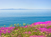 Isla y flores Fotografía de archivo