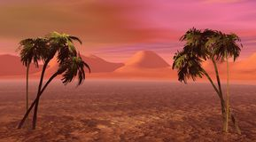 Isla y palma dos Imágenes de archivo libres de regalías