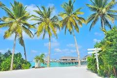Isla y palmera de Maldives imagenes de archivo
