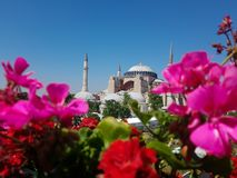 Mosque hagia sofia with flowers royalty free stock photos