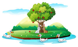 An island with animals Royalty Free Stock Image