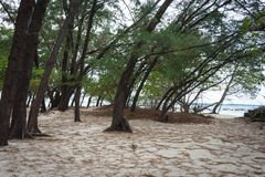 An island around Harapan Island which has lush trees with white sand. An island around Harapan Island, Indonesia which has lush trees with white sand stock photos