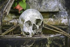 Welcome to Lake Batur!. On the Island of Bali, and Lake Batur is a graveyard where locals follow century old traditions of stacking the skulls of dead relatives royalty free stock photo