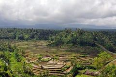 Island Bali - rice fields (paddy). Cloudy landscape rice fields in island Bali, Indonesia Royalty Free Stock Photography