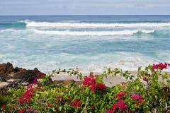 Island Beach. Bougainvillea frames the shore on this Molokai beach Stock Image