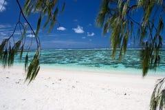 Island beach and trees Royalty Free Stock Photos