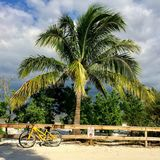 Island Bicycle and Palm Tree royalty free stock photography