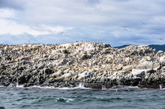 Island with birds, Beagle Channel, Ushuaia, Argentina Stock Photo