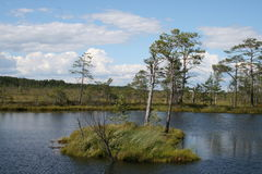 Island in the bog. Island in the lake in the bog Royalty Free Stock Images