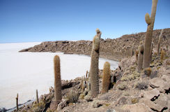 Island with Cactuses in a salt desert of Uyuni in Bolivia Stock Image