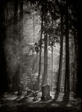 Island Cemetery. A very spooky cemetery with fog and light streaming through the trees on an island in the Puget Sound area of Washington State Royalty Free Stock Image
