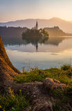 Island with Church in Bled Lake, Slovenia at Sunrise Stock Images