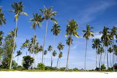 Island Coconut Trees Stock Image