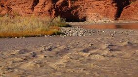 Island on Colorado River stock video