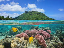 Island coral and fish underwater French Polynesia Stock Photography