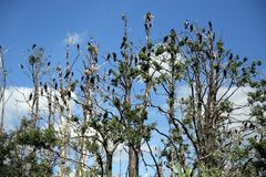 Island of cormorants. In sunny day Stock Photos
