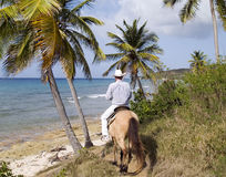 Island Cowboy By The Ocean. Island cowboy riding through the palm trees down to the beach on a buckskin horse Stock Photos