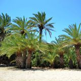 Island crete, greece, palm tree Royalty Free Stock Photography