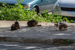 Homeless cats rest from the heat in the shade. On the island of Cyprus, homeless cats slept in the shade of the trees. People and cars do not bother carefree royalty free stock photos