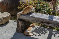 Homeless cats rest from the heat in the shade. On the island of Cyprus, homeless cats slept in the shade of the trees. People and cars do not bother carefree royalty free stock photo