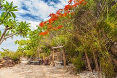 Island with Delonix Regia Trees in Nha Trang, Vietnam Stock Photo