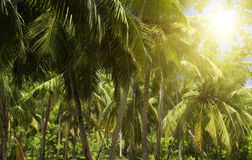 The island of dreams. Palmes forest. Royalty Free Stock Photography
