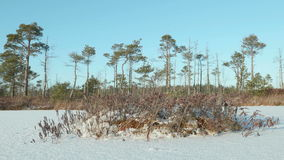 Island of the dried grass. Clean and frosty daytime. Smooth dolly shot. Island of the dried grass on the frozen lake. Clean and frosty daytime. Smooth dolly shot stock footage