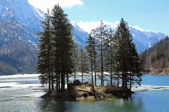 Island with firs on the alpine lake. Island with trees on the alpine lake in winter Royalty Free Stock Images