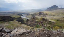 Island flodkanjon arkivbilder