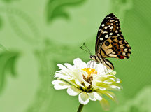 Island floral butterfly. Stock Photos