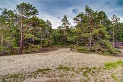 Island Forest. Olkhon island, Baikal, Siberia Stock Photos