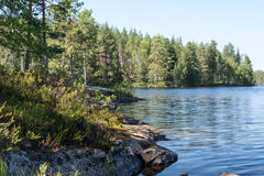 Island, forest and reflection in calm waters of the lake Stock Photos