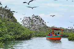 Island of frigate birds boat ride Royalty Free Stock Photography