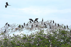 Island of frigate birds Stock Photo