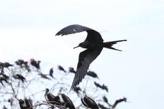 Island of frigate birds Royalty Free Stock Image