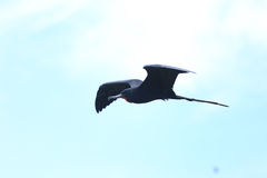 Island of frigate birds Royalty Free Stock Photo