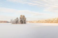 Island on the frozen winter lake. Stock Photography