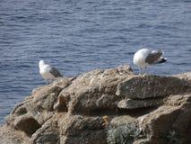 Island full of seagulls in summer, sanctuary stock photo