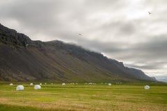 Island-Grünlandschaft mit Heustapeln Stockbilder