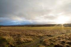 Island-Grünwiese Lizenzfreies Stockfoto