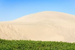 Island green grass in the sand dunes. Royalty Free Stock Image