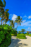 The island grows tall coconut trees Royalty Free Stock Photos