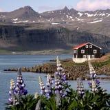 Island-Häuser Lizenzfreies Stockfoto