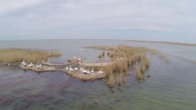 Island hosting colonies of dalmatian pelicans, aerial view stock video