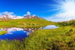 Island im Juli Stockfotos