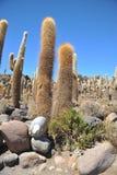 Island Inca Wasi - cactus island Stock Image