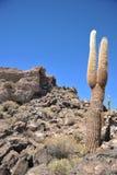 Island Inca Wasi - cactus island Royalty Free Stock Photos